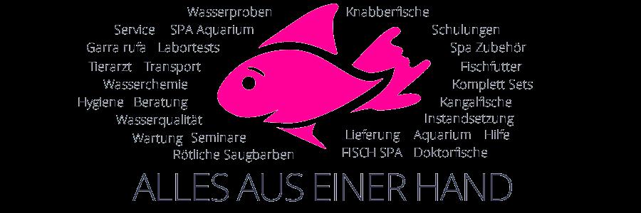 Knabberfische / Garra rufa / Kangalfische