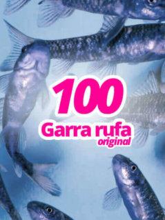 100-original-garra-rufa-knabberfische