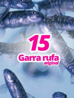 15-original-garra-rufa-knabberfische