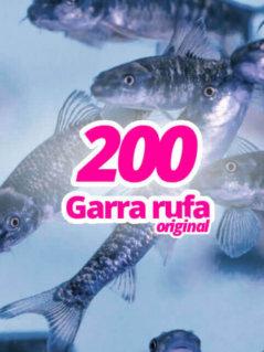 200-original-garra-rufa-knabberfische