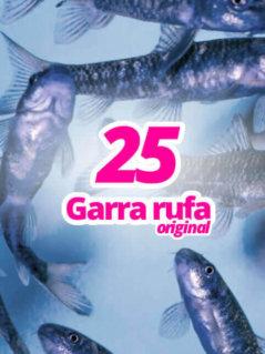 25-original-garra-rufa-knabberfische
