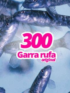 300-original-garra-rufa-knabberfische