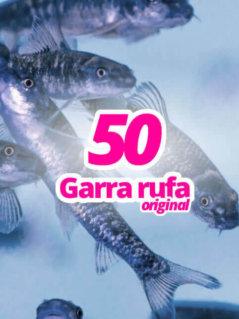 50-original-garra-rufa-knabberfische