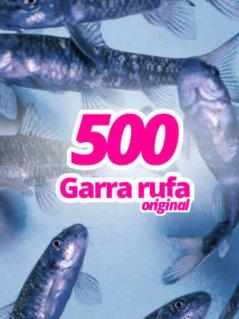500-original-garra-rufa-knabberfische